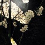 奈良・東大阪の楽しいバイオリン教室 りり先生の無料体験レッスン